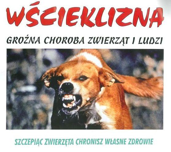 Nowy harmonogram obowiązkowego szczepienie psów