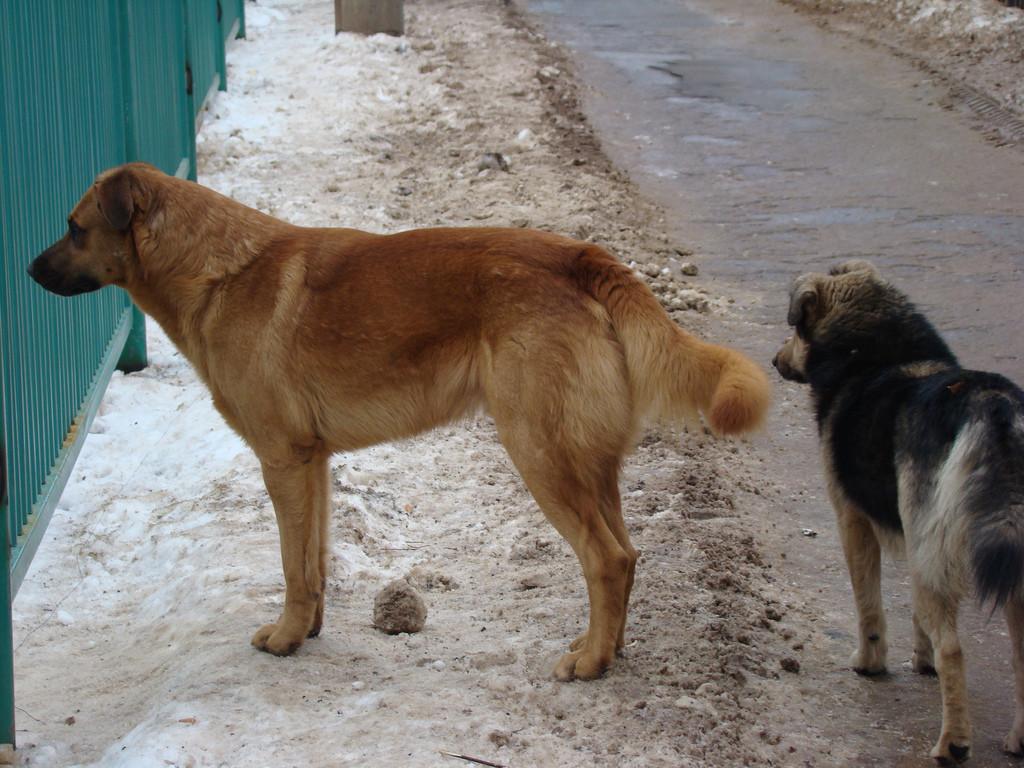 Zgłoszenia konieczności wyłapania bezdomnych psów i kotów