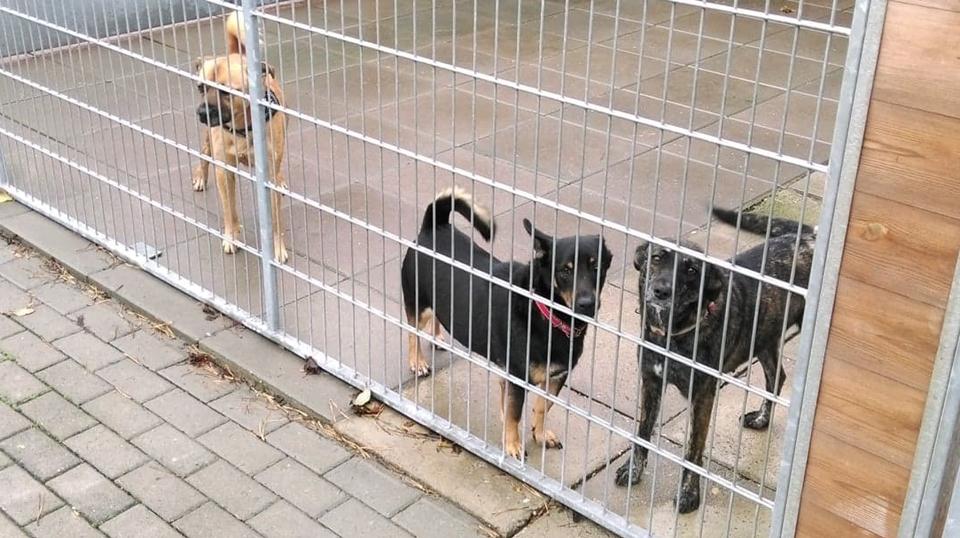 Przygarnij psa ze schroniska-dowiedz się więcej o psiej adopcji