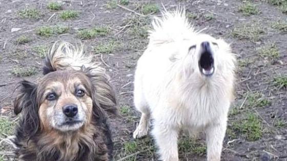 Pomoc na leczenie psów ze Zbytkowa